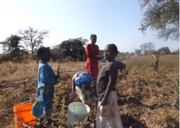 Children helping on the farm (Zambia)